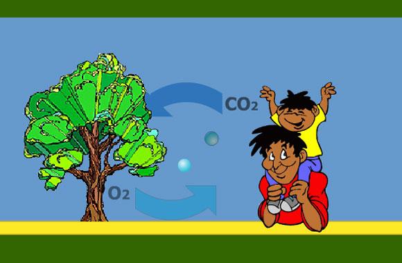 AAE Forestry Learning Module